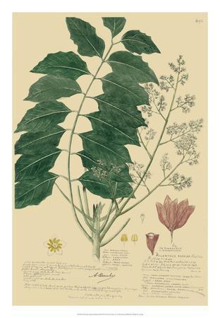 Descubes Tropical Botanical III