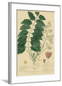 Descubes Tropical Botanical III by A^ Descubes