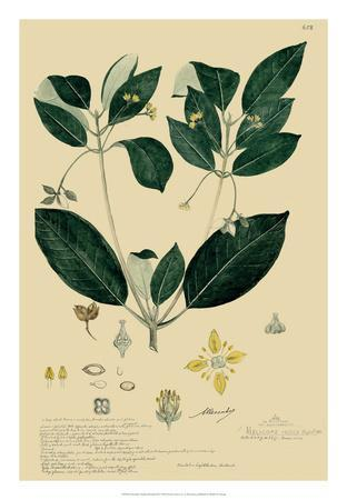 Descubes Tropical Botanical IV