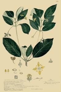 Descubes Tropical Botanical IV by A. Descubes
