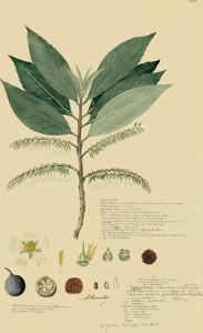 Tropical Descubes III by A. Descubes