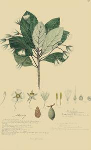 Tropical Descubes IV by A. Descubes