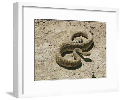 Wild Rattlesnake Desert Animal Wall Decor Art Contemporary Black Framed Picture