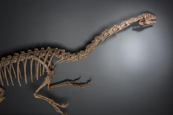 A dinosaur from the Late Cretaceous period at the Natural History Museum of Utah.-Cory Richards-Photographic Print
