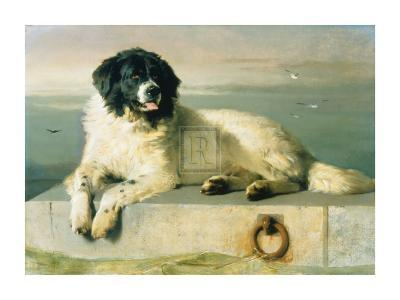 A Distinguished Member Of The Humane Society-Edwin Henry Landseer-Art Print