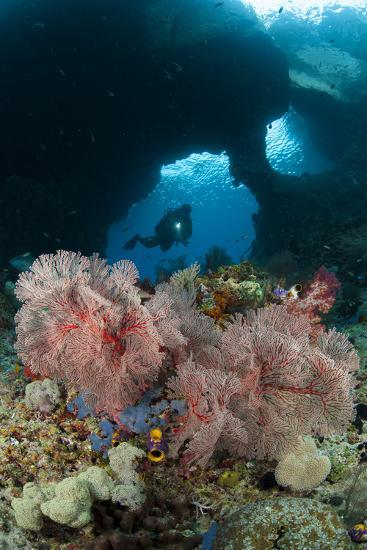 A Diver Approaches a Gorgonian Sea Fan, Indonesia--Photographic Print