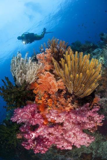 A Diver Approaches Colorful Soft Corals and Crinoids on the Reefs of Raja Ampat--Photographic Print