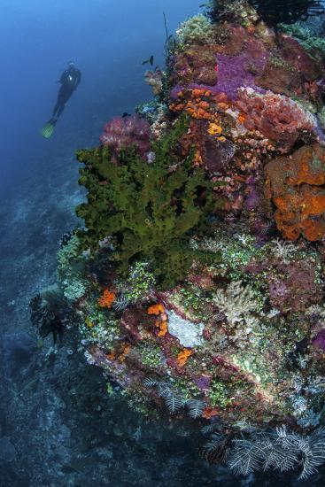 A Diver Hovers Above a Colorful Coral Reef-Stocktrek Images-Photographic Print