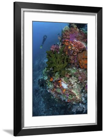 A Diver Hovers Above a Colorful Coral Reef-Stocktrek Images-Framed Photographic Print