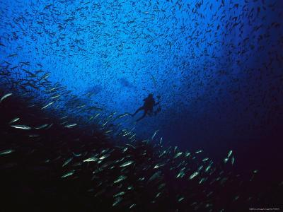A Diver Swimming Amid a Huge School of Small Fish-Heather Perry-Photographic Print