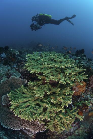 A Diver Swims Above a Healthy Coral Reef in Indonesia-Stocktrek Images-Photographic Print