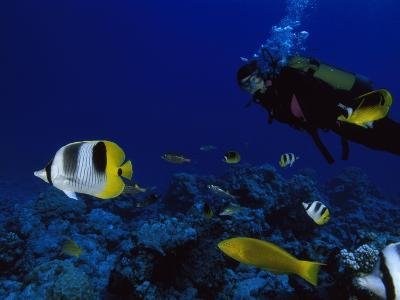 A Diver Swims with Butterfly Fish and Other Fish-Tim Laman-Photographic Print