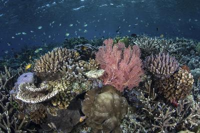 A Diverse Array of Corals Grow in Raja Ampat, Indonesia-Stocktrek Images-Photographic Print