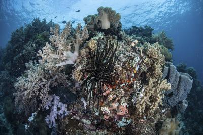 A Diverse Array of Invertebrates Cover a Healthy Reef in Indonesia-Stocktrek Images-Photographic Print
