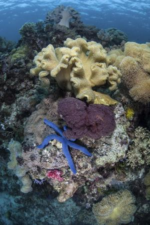 A Diverse Array of Invertebrates Cover a Reef in Indonesia-Stocktrek Images-Photographic Print