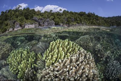 A Diverse Array of Reef-Building Corals in Raja Ampat, Indonesia-Stocktrek Images-Photographic Print