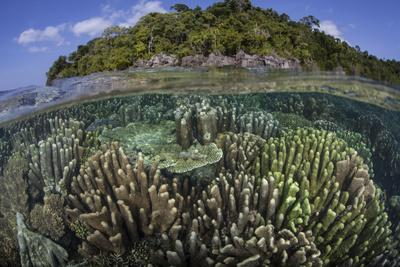 https://imgc.artprintimages.com/img/print/a-diverse-array-of-reef-building-corals-in-raja-ampat-indonesia_u-l-q12ssbq0.jpg?p=0