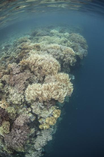 A Diverse Coral Reef Drops into Deep Water in Raja Ampat, Indonesia-Stocktrek Images-Photographic Print