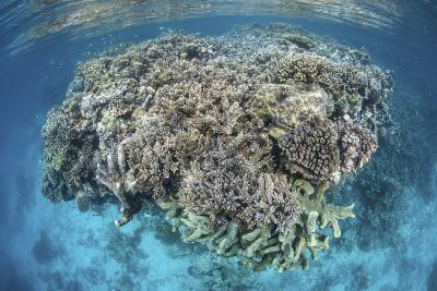 A Diverse Coral Reef Grows in Shallow Water in the Solomon Islands-Stocktrek Images-Photographic Print