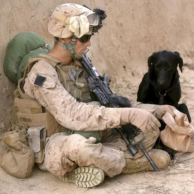 A Dog Handler Gives Water To His Dog While On a Patrol in Afghanistan-Stocktrek Images-Photographic Print