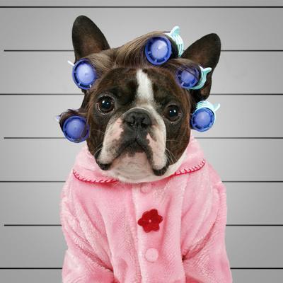 https://imgc.artprintimages.com/img/print/a-dog-in-front-of-a-convict-poster-getting-a-mug-shot-taken_u-l-q1037ua0.jpg?p=0