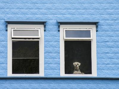 A Dog Looking Through a Hotel Window in Akureyri, Iceland-Michael Melford-Photographic Print
