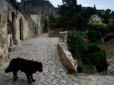 A Dog on a Cobbled Walkway in Baux De Provence-AJ Wilhelm-Photographic Print