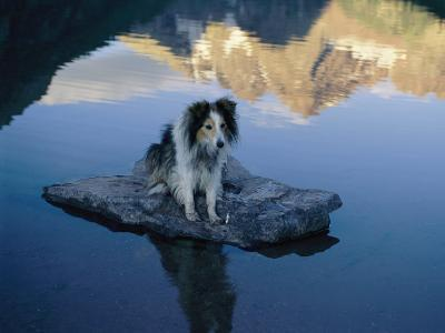 A Dog Perches Upon a Rock in the Middle of a Glassy Lake-Joel Sartore-Photographic Print