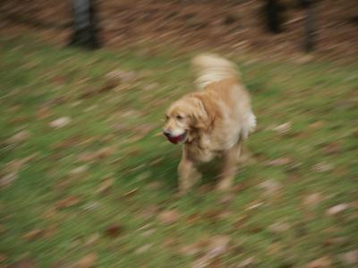 A Dog Plays Catch in the Backyard-Stacy Gold-Photographic Print