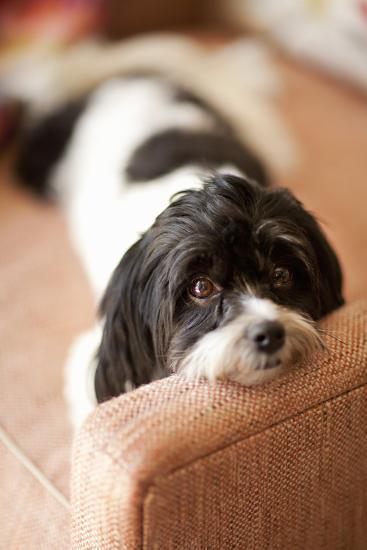A Dog's Life V-Karyn Millet-Photographic Print
