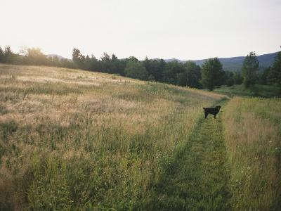 A Dog Waits for its Master in a Swath of Freshly Mown Field at Sunset-Bill Curtsinger-Photographic Print