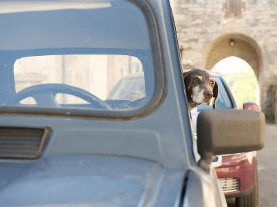 A Dog Waits Patiently for its Owner in a Classic French Renault 4, France, Europe-Craig Easton-Photographic Print