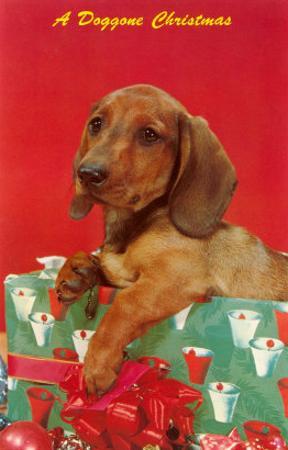 A Doggone Christmas, Dachshund