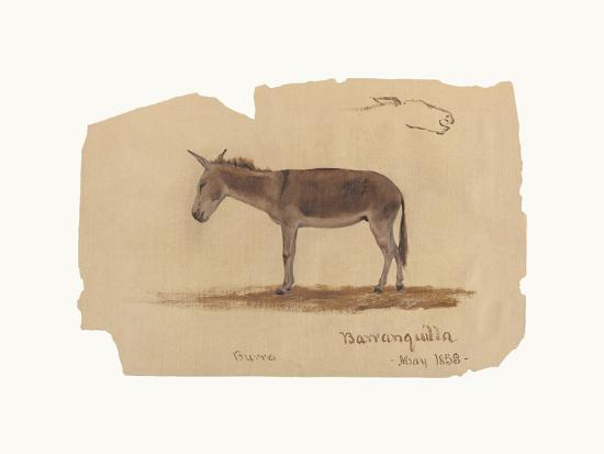 A Donkey, Barranquilla, Colombia-Frederic Edwin Church-Premium Giclee Print