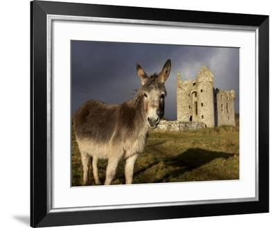 A Donkey Grazes in Front 17th Century Monea Castle, County Fermanagh, Ulster, Northern Ireland-Andrew Mcconnell-Framed Photographic Print