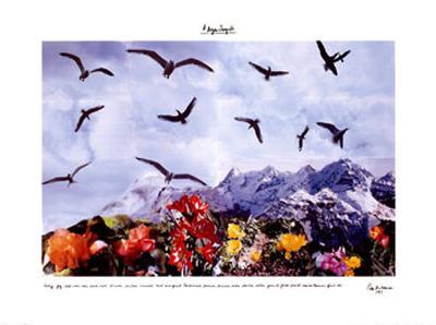A Dozen Seagull, c.1997-Peter Hutchinson-Art Print