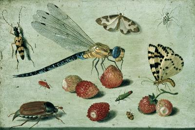 A Dragon-Fly, Two Moths, a Spider and Some Beetles, with Wild Strawberries, 17th Century-Jan Van, The Elder Kessel-Giclee Print