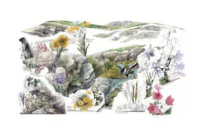 A Drawing of the Wildflowers in America's Alpine Tundras-Jack Unruh-Giclee Print
