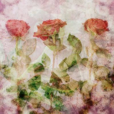 A Dreamy Floral Montage from Three Red Roses-Alaya Gadeh-Photographic Print