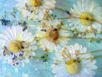 A Dreamy Playful Floral Montage from Acre Flowers, Daisyies and Other Wild Grown Flowers-Alaya Gadeh-Photographic Print