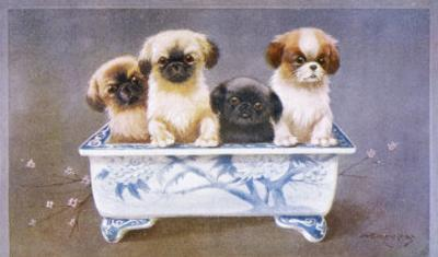 Four Pekingese Puppies Sitting in a Chinese-Style Ceramic Bowl by A. E. Kennedy