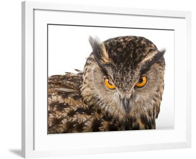 A Eurasian Eagle Owl, Bubo Bubo, at Zoo Atlanta-Joel Sartore-Framed Photographic Print