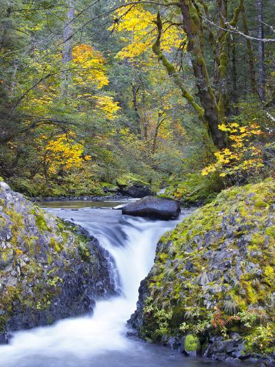 A Fall Color Scene on Eagle Creek in the Columbia Gorge, Oregon, USA-Gary Luhm-Photographic Print