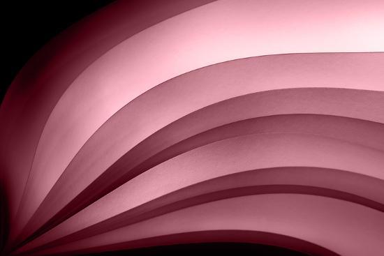 A Fan of Purple - Summer-Ursula Abresch-Photographic Print