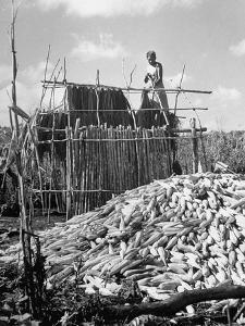 A Farmer Building a Hut in Which to Store Corn