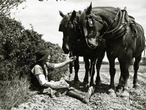 A Farmer Takes a Break with His 2 Horses after Ploughing His Field, 1934