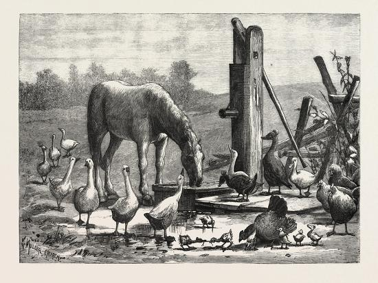 A Fashionable Watering Place. Horse, Geese, Chicken, Outdoor, Farm, 1876--Giclee Print