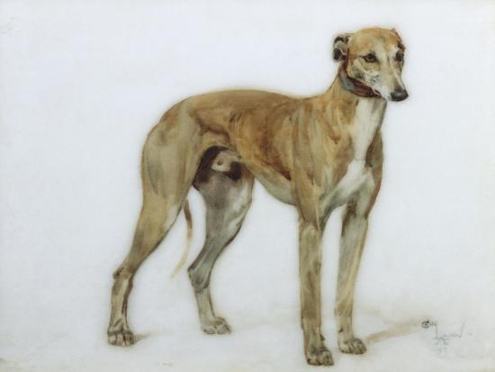 A Fawn Greyhound, 1897-Cecil Charles Windsor Aldin-Giclee Print
