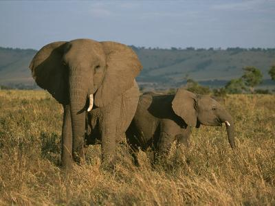 A Female Elephant with Her Baby on a Masai Mara Plain-Roy Toft-Photographic Print