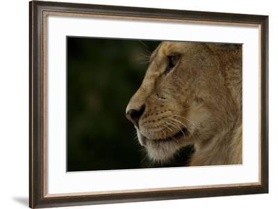A Female Lion Cub from the Vumbi Pride-Michael Nichols-Framed Photographic Print